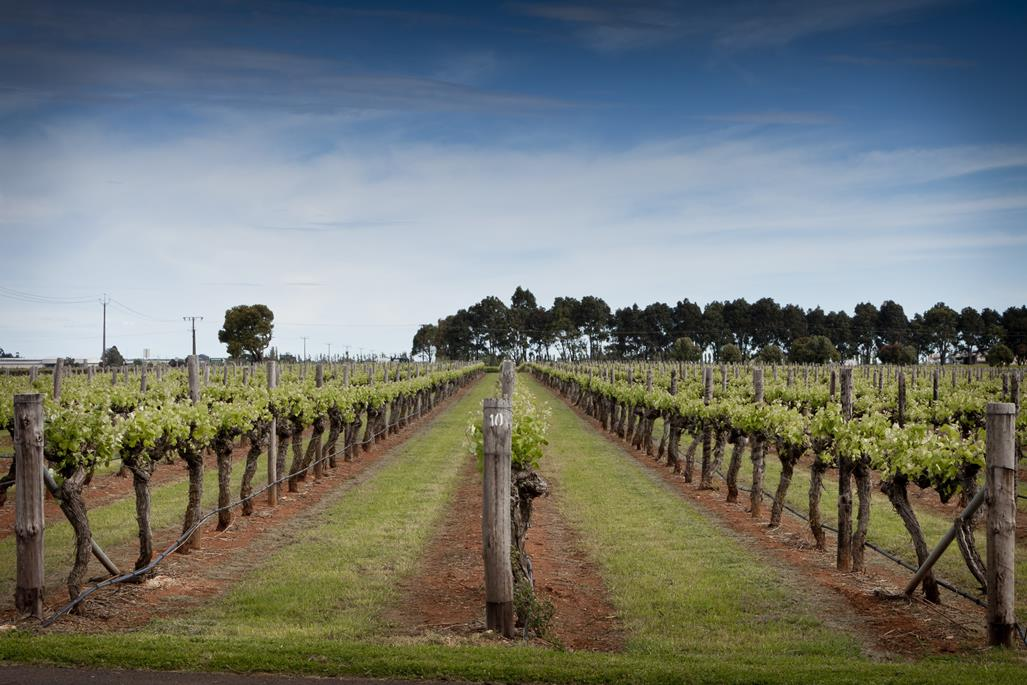 Coonawarra Australia  city photo : Coonawarra The Land : This Magnificent Life