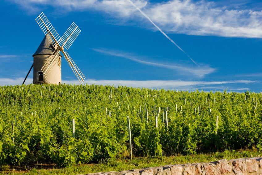 beaujolais-vineyard