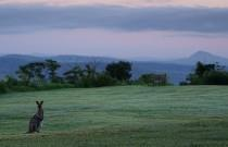 24 Hours in the Scenic Rim Part 2