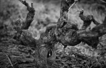 LANGMEIL – A WINEMAKER'S DREAM