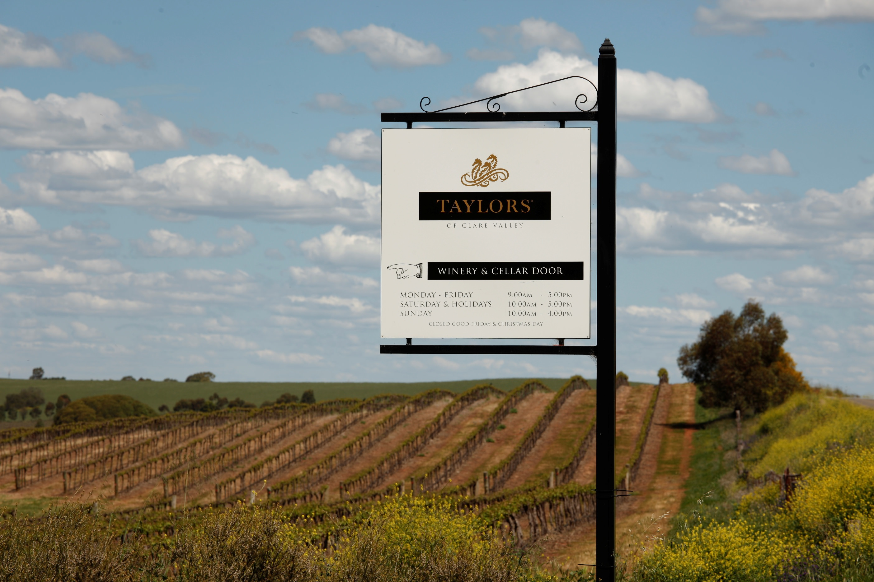 Taylors Wines This Magnificent Life