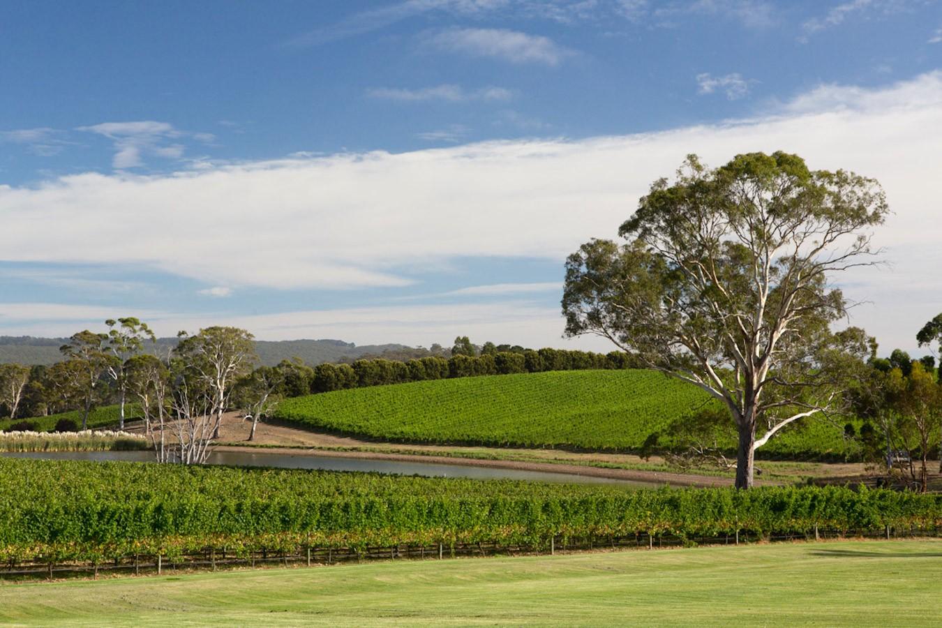 Where else but Australia? The beautiful Adelaide Hills