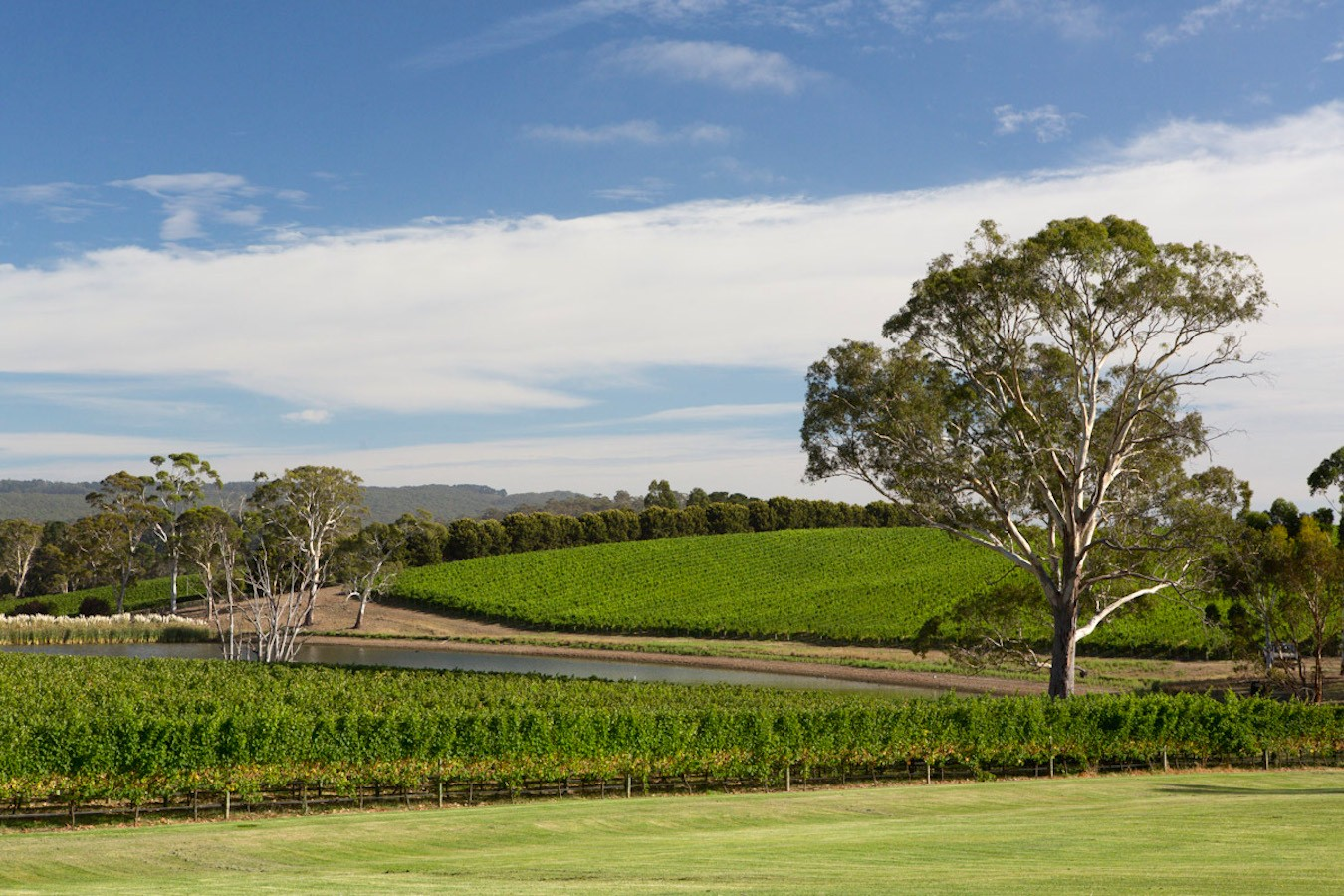 Where else but Australia? The beautiful Adelaide Hills