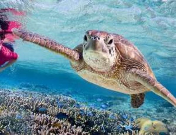 Turtles Bundaberg