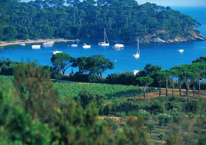 Provence This Magnificent Life