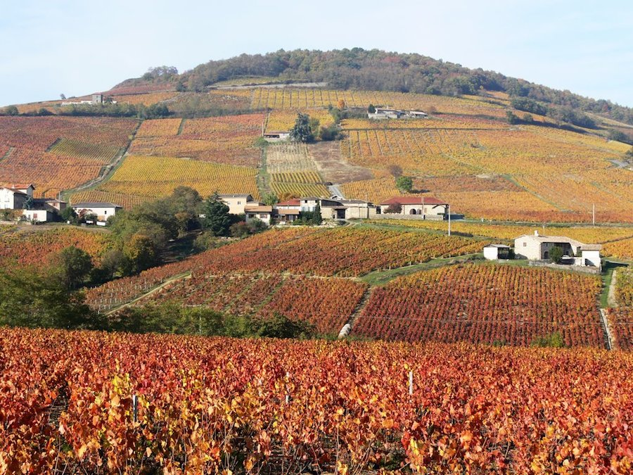 Beaujolais This Magnificent Life
