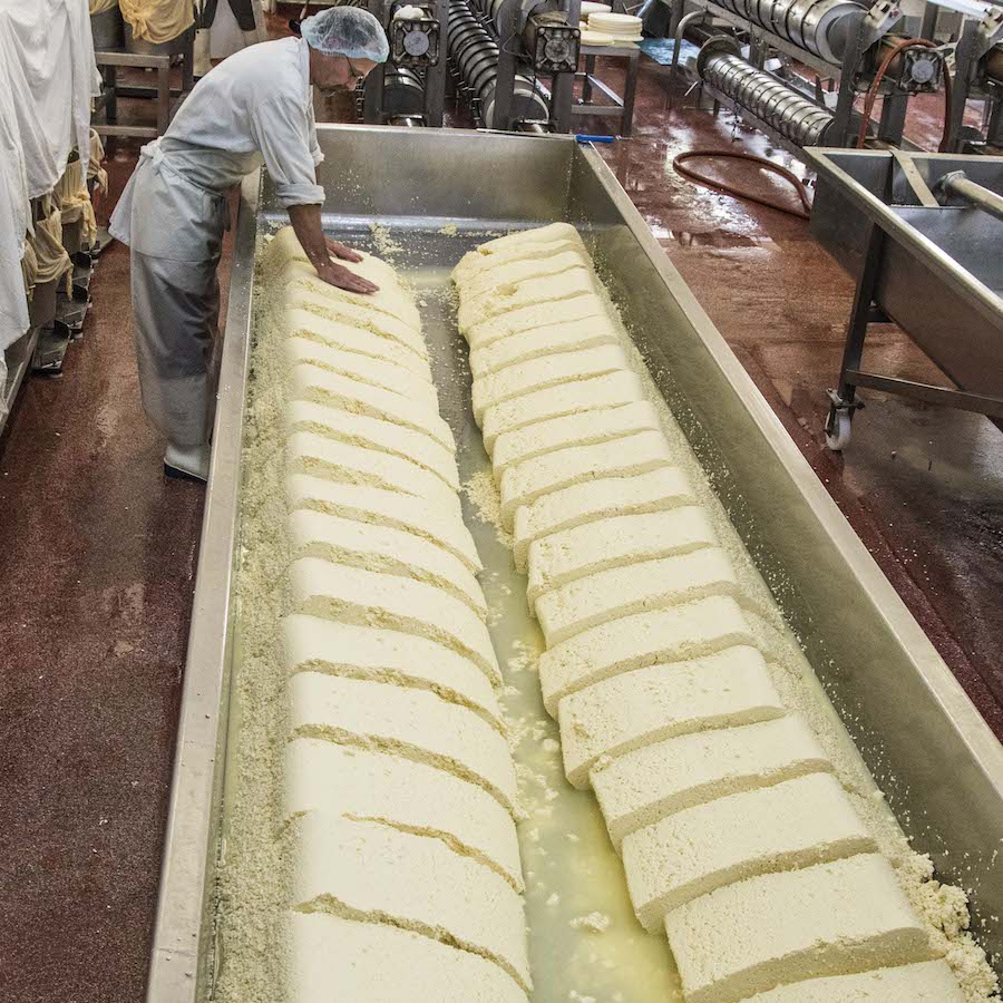 Quicke's Cheddar This Magnificent Life