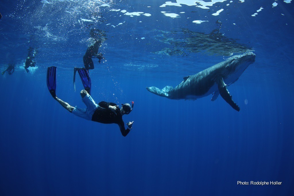 Tahiti Private Expeditions This Magnificent Lifes