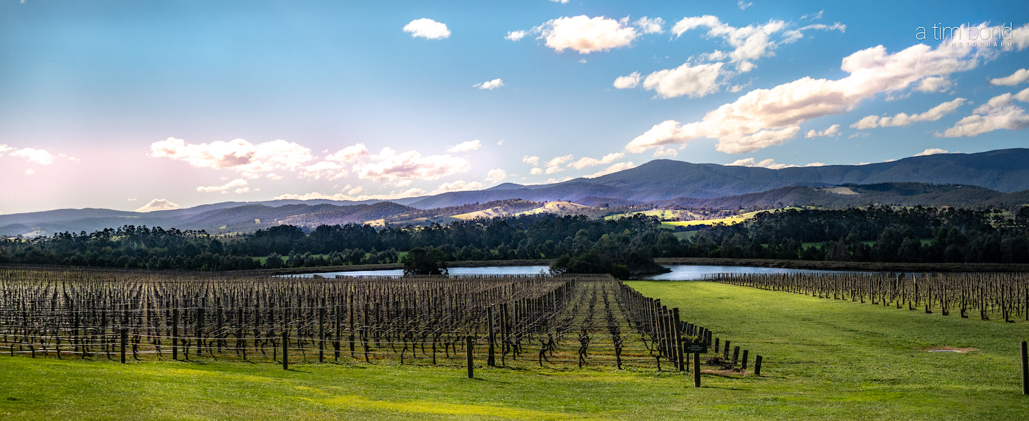Wine Yarra Valley This Magnificent Life