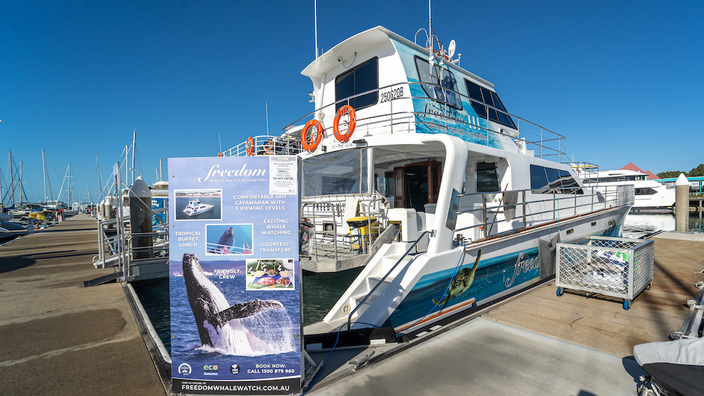 Freedom Whale Watch Hervey Bay This Magnificent Life