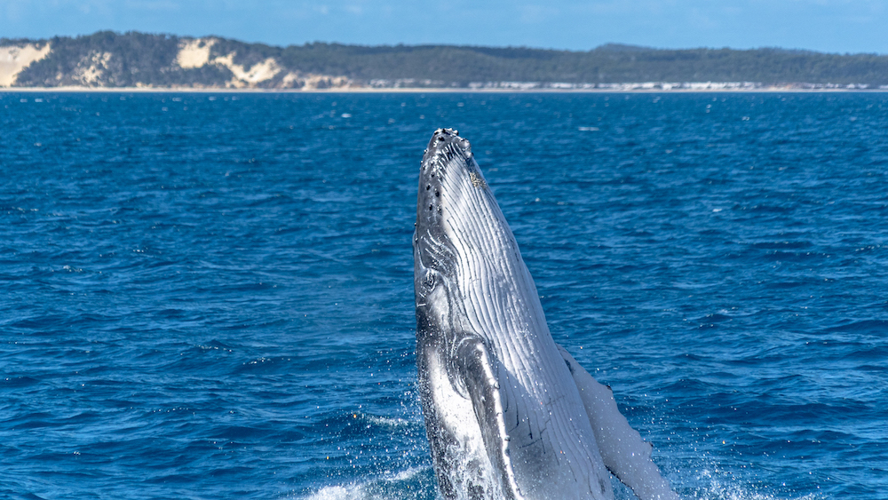 Hervey Bay This Magnificent Life
