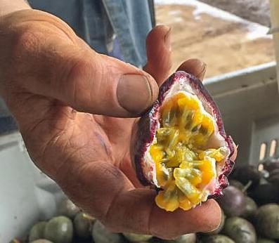 Taste Bundaberg This Magnificent Life