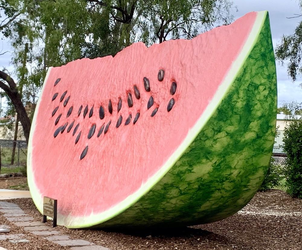 Chinchilla The Big Melon This Magnificent Life